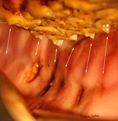 Equine Mouth Ulcers http://www.restless-night.com/articles/horses_mouth.shtml